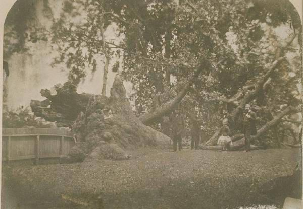 charter oak  history