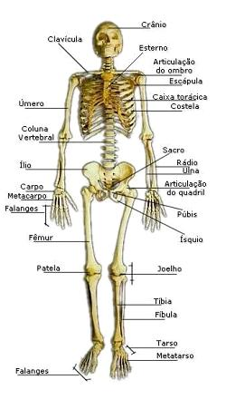 corpo humano nomes construindo o conhecimento em educa o f sica