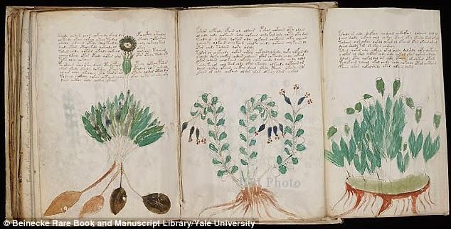 Misteri Naskah Voynich Terungkap?