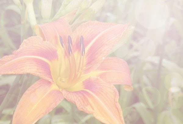 Romantic Daylily Soft Photograph With Bokeh In Photoshop - How To