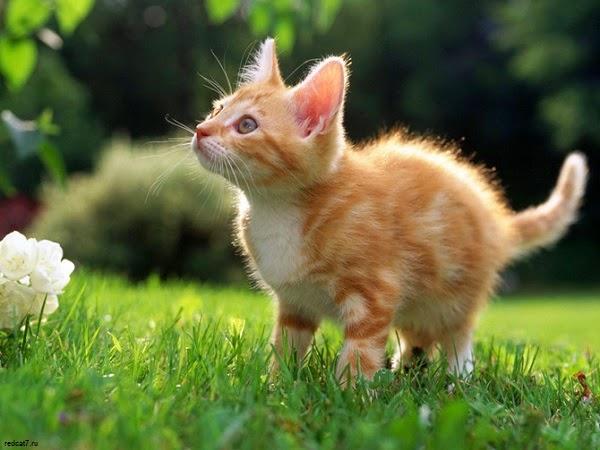 Photo chats trop mignons roux dans le jardin