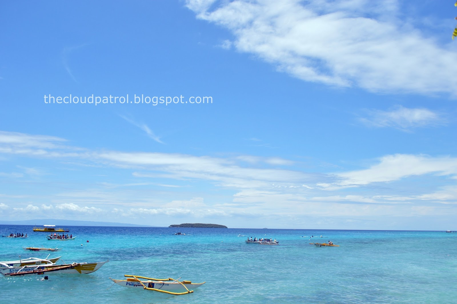 Whale shark, Cebu, Butanding, Sumilon island, sumilon