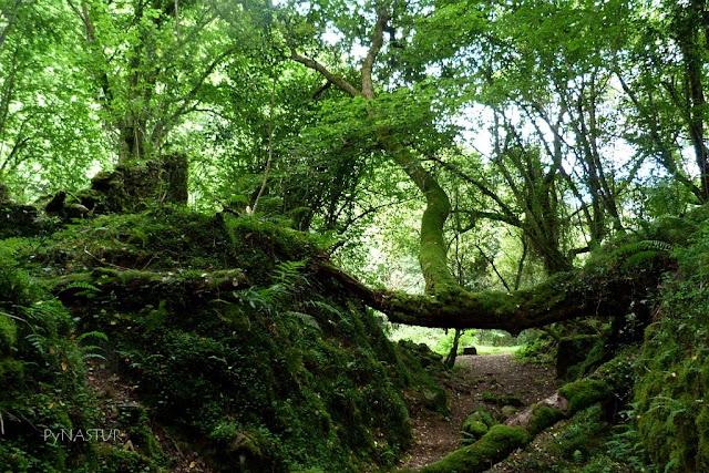 Hayedo de la Biescona - Sierra del Sueve - Asturias