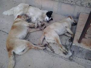 Animais estão morrendo por toda a cidade (Foto: Celso Oliveira/Rádio Nordeste)