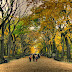 Central Park: The Largest Park In United State of America