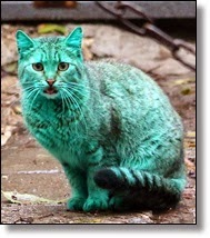 Picture of green cat