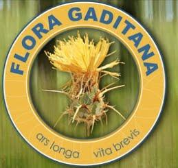 FLORA GADITANA (facebook)