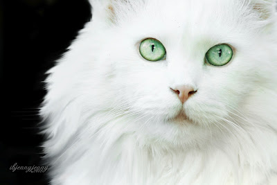 Mikey, White Cat