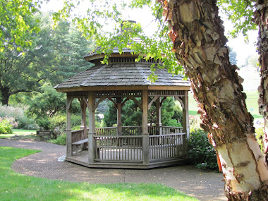 Gazebo and River Birch