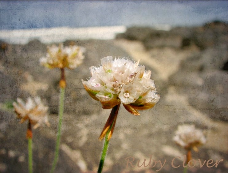 Little Flowers in Castlerock, Co. Antrim