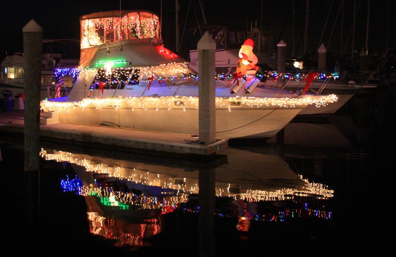 Florida christmas lights phillip s natural world
