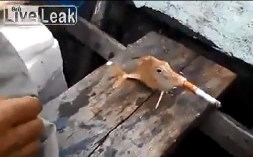 Vídeo de peixe fumando cigarro revolta os internautas