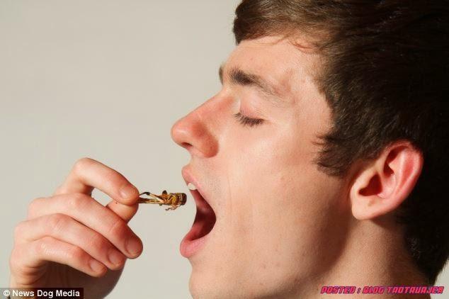 serangga adalah pilihan 'makanan' terbaik untuk diet sehariannya