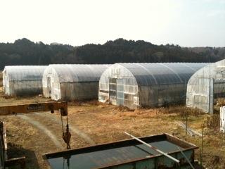 しいたけを栽培しているビニールハウス