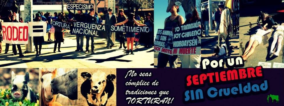 Puerto x los Animales
