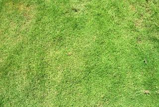 Tips Menanam dan Merawat Rumput Taman Hias