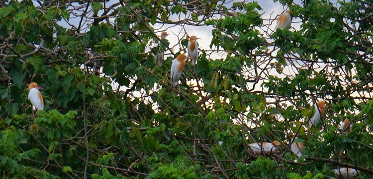 Photo by: South Cotabato Org Baras Bird Sanctuary