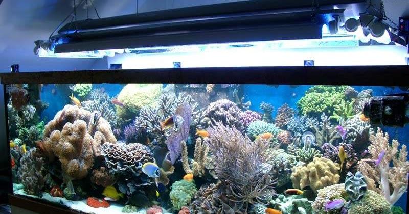 L 39 aquarium r cifal faut il qu un aquarium soit ouvert ou for Aquarium ouvert