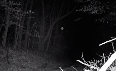 Orb Entity Caught On Animal Trial Cam 2015, UFO Sightings