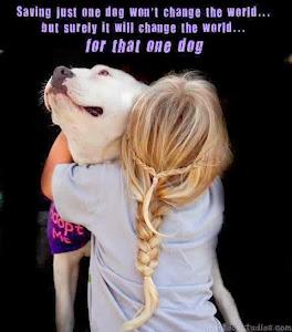 Bir köpeği kurtarmak dünyayı değiştirmez