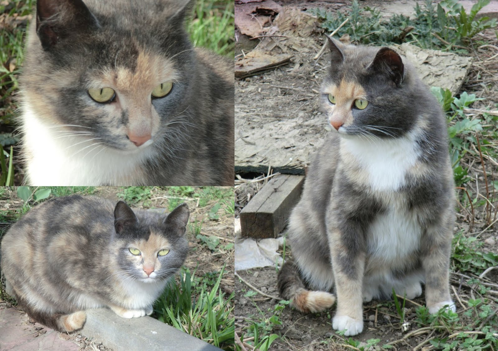 The outside cat, Mishi