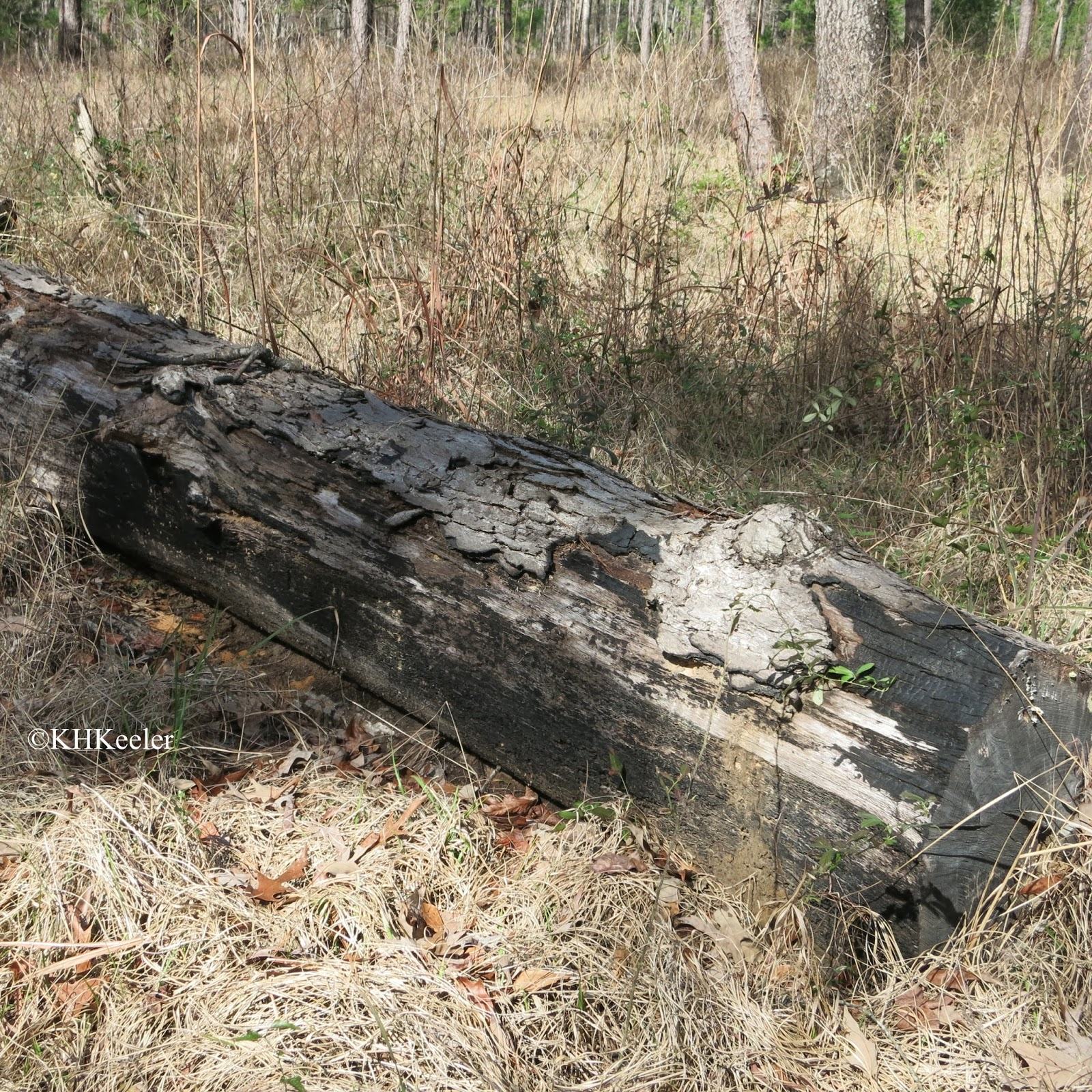 burned log indicates past fire