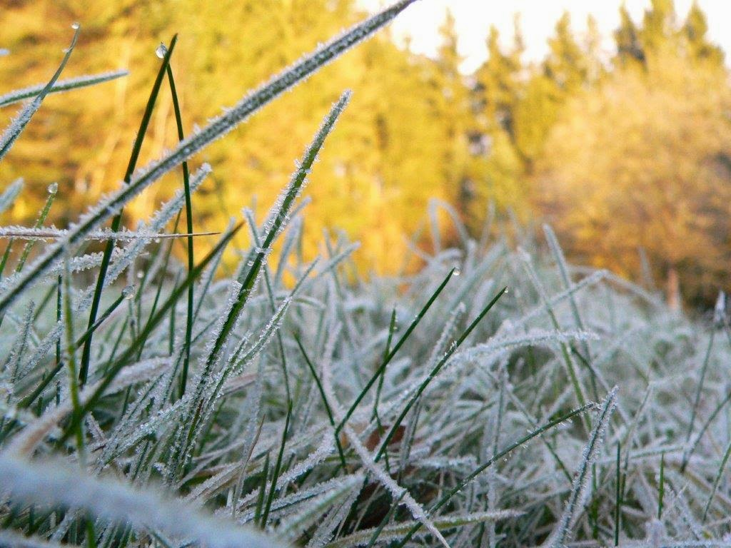 Eis Winter Grashalm Wiese Weihnachten