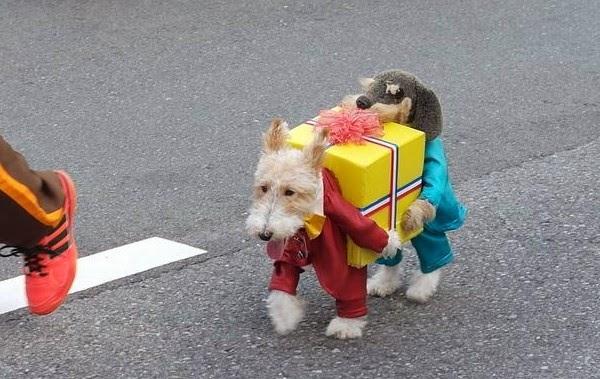 Best Alarm Dog Breeds