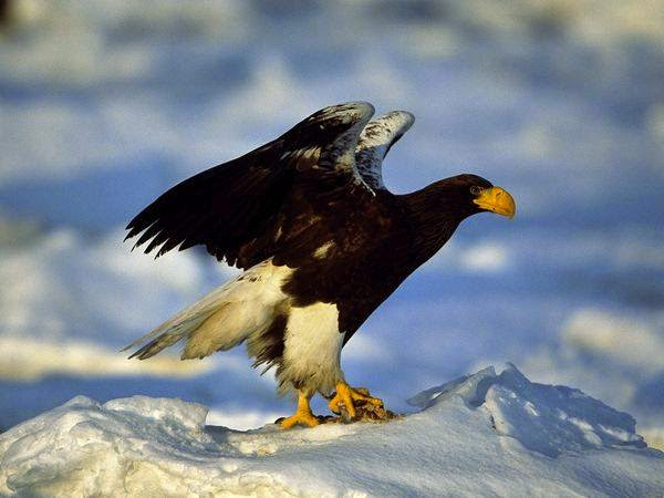 animals, amazing photo, photosaddict, eagle