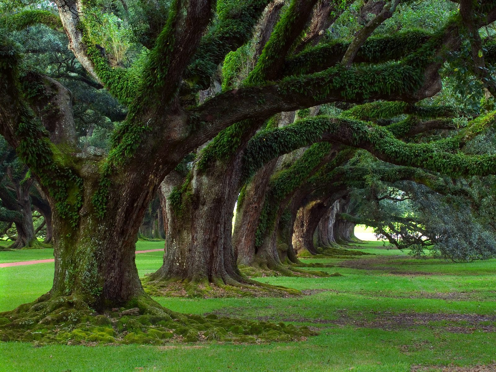 Louisiana Nature