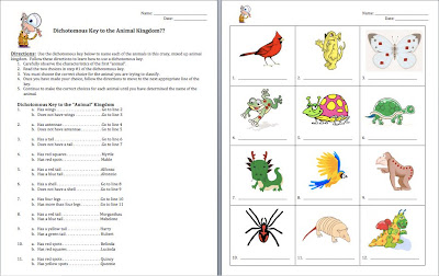 animal worksheet new 433 animal classification worksheet year 1. Black Bedroom Furniture Sets. Home Design Ideas
