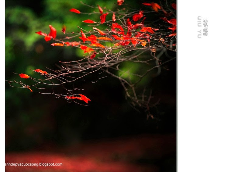 Chiếc lá mùa thu 13