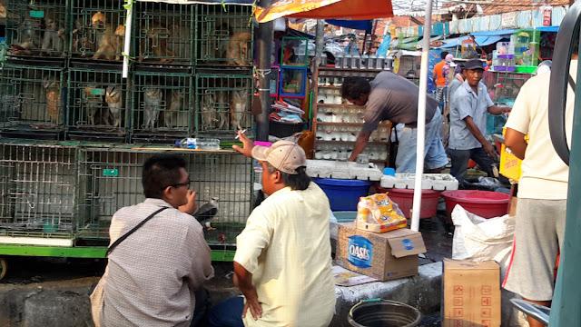 Perdagangan Satwa Liar di Jakarta Tidak Terkendali
