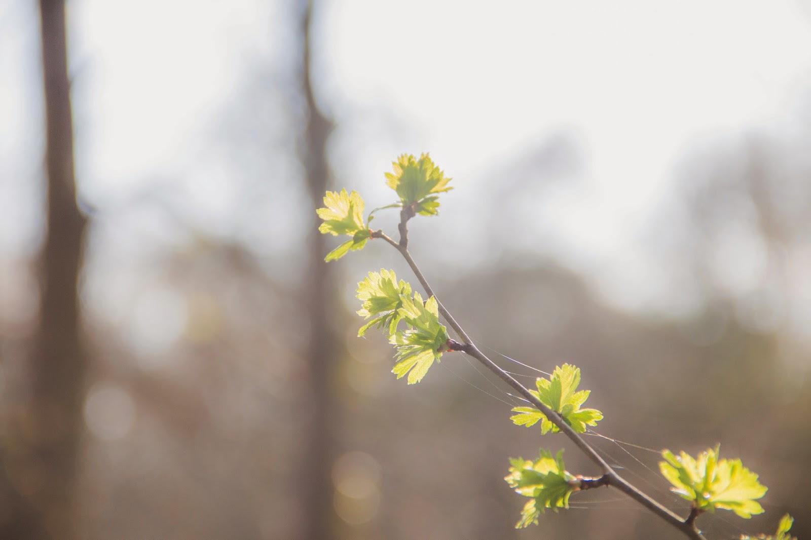 Printenps arbre