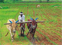 Current Situation of Agriculture in India