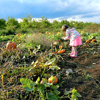 Pick Your Own Pumpkin Patch Farm_New England Fall Events
