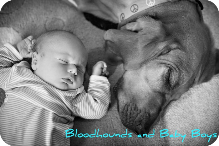 Bloodhounds and Baby Boys