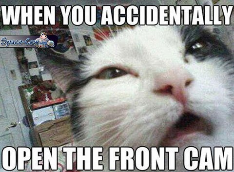 funny cat humor picture