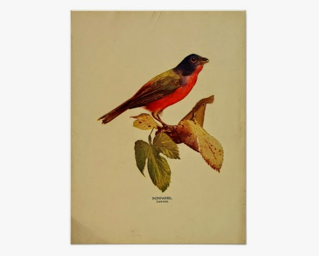 http://www.zazzle.com/vintage_nonpareil_painted_bunting_color_photo_poster-228897685887926164