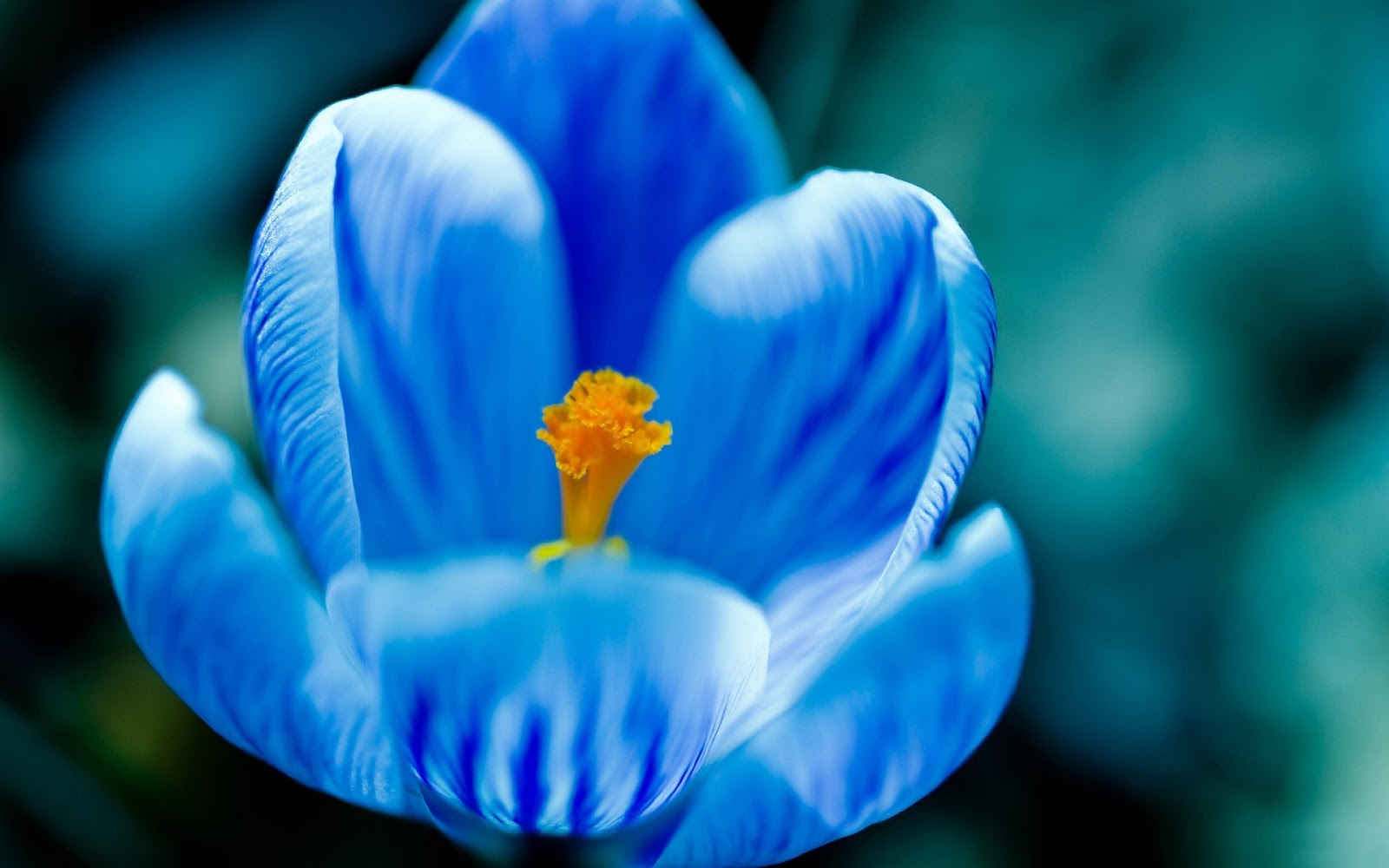 Blue Flower Wallpapers - asimBaBa | Free Software | Free ...