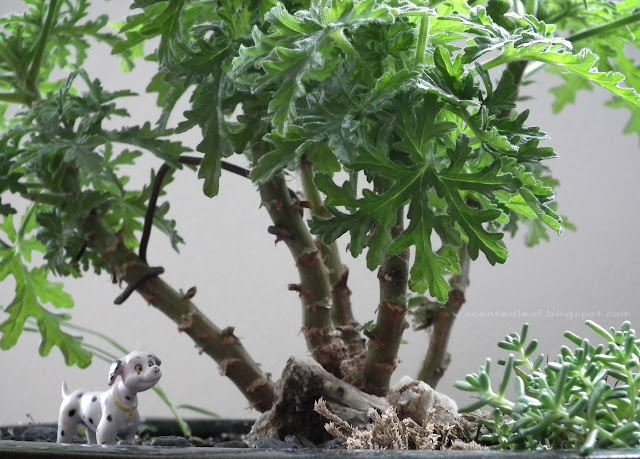 Dalmatian hidden in Candy Dancer Forest Bonsai