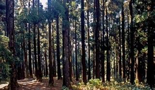 7 Hutan Terangker Di Dunia