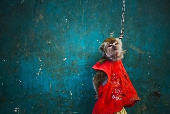 pettur monkeys indonesian doll face monkeys mask street money beggars mendigo macaco salve preso arrested