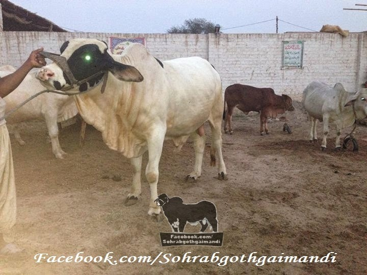 Khawaja Gareeb Nawaz Cattle Farm