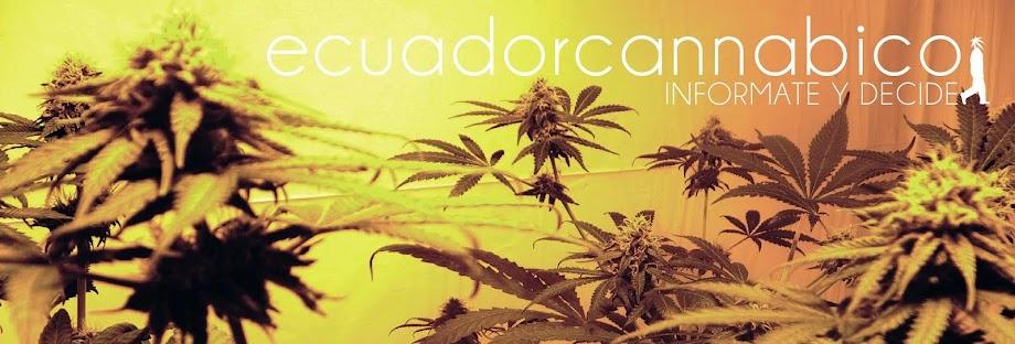 ECUADOR CANNÁBICO
