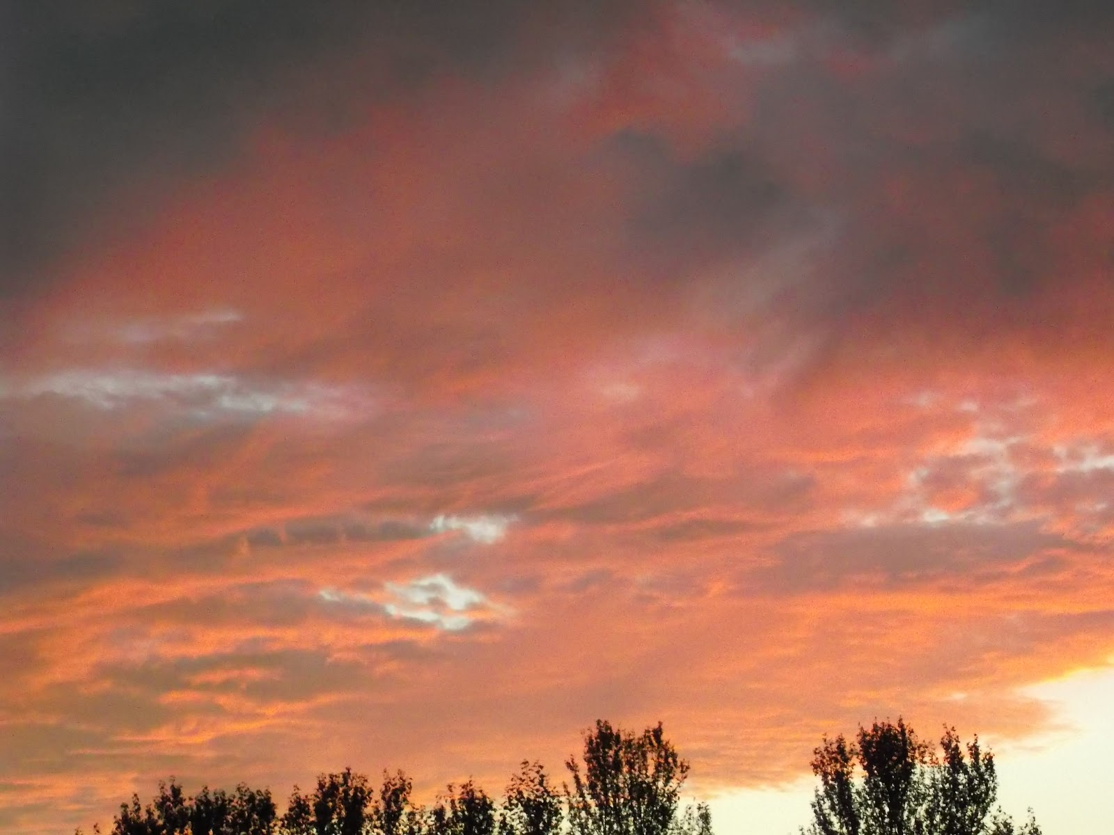 red sky at morning essay Red sky at morning is a 1968 novel by richard bradford it was made into a 1971 film of the same name the book follows josh arnold.