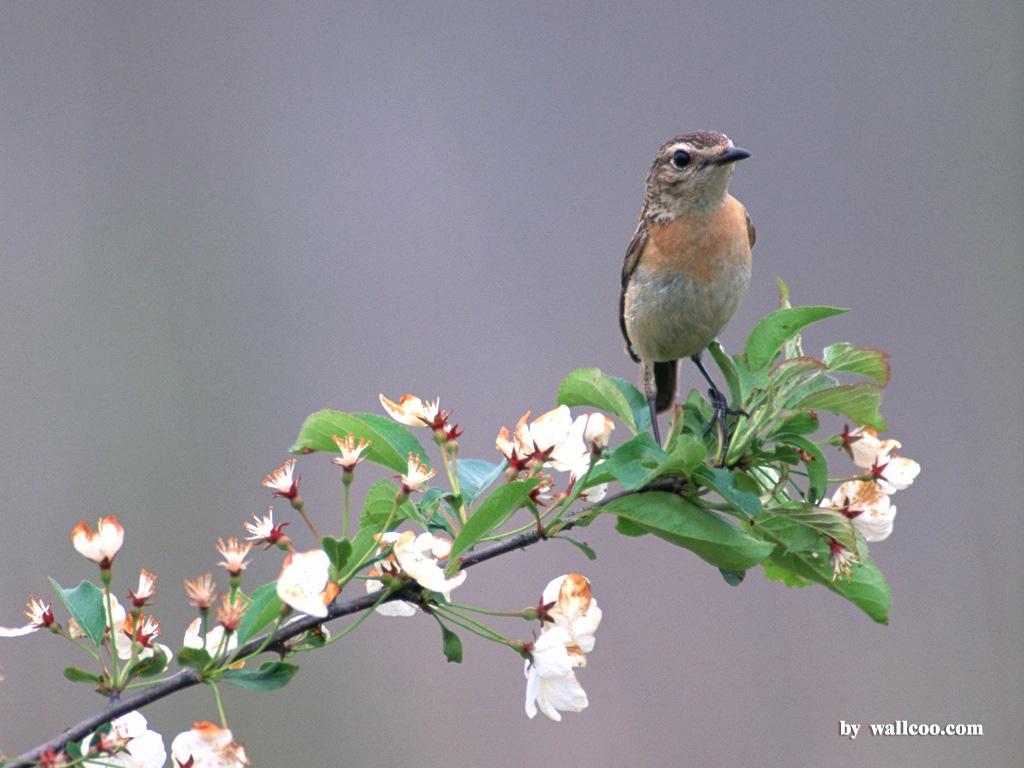 http://1.bp.blogspot.com/-wkX3u_U9rSA/Tka9Rs3xcSI/AAAAAAAACDE/1eXe56y_PVo/s1600/bird_wallpapers_07.jpg