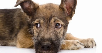 http://longislandpetpages.com/national-mutt-day-honors-americas-favorite-pets/