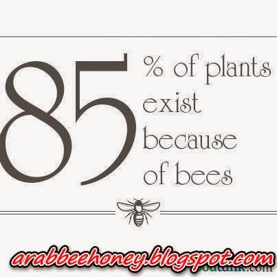 بالصور-فائدة وجود نحل العسل