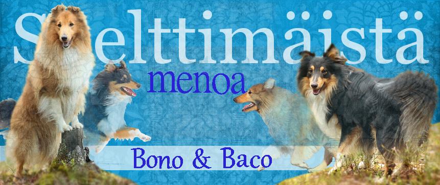 Shetlanninlammaskoirat Bono & Baco